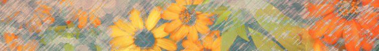 cropped-cropped-ronykusnadi_orangebeauty_banner_01c.jpg